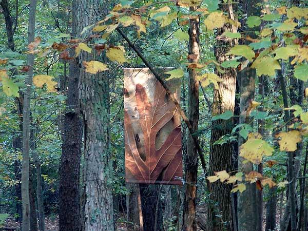 Matisse Banner in woods