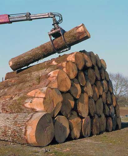 Machine et tronc d'arbres