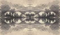 Lotus Dawn