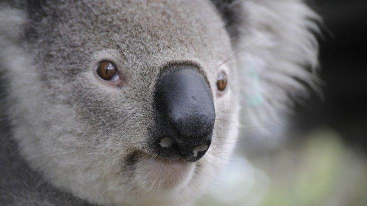 まさに世界の終わり!オーストラリア(豪)森林火災に雹と砂嵐発生!宇宙から見た煙が国の70%を覆う