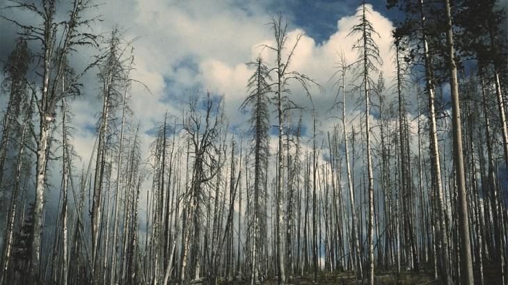 【大気汚染】酸性雨のメカニズム・原因・影響・対策とは?ハゲるのは本当?