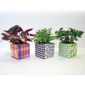 Trio caches-pot avec plantes