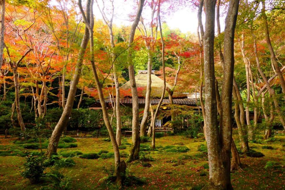 Beautiful moss gardens outside Gio-ji Temple in Kyoto