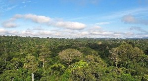 Cristalino Forest Reserve