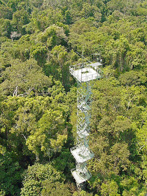 cristalino jungle lodge canopy tower jorge lopes