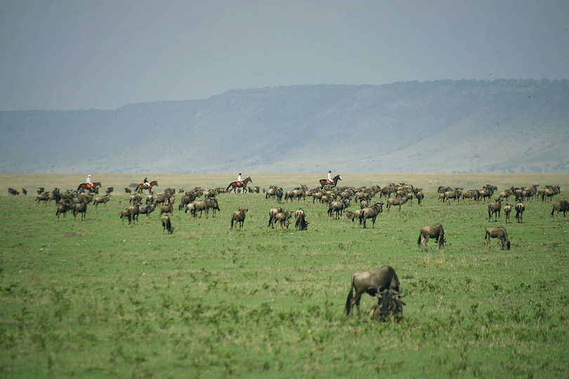 Maasai Mara , horse riding safaris