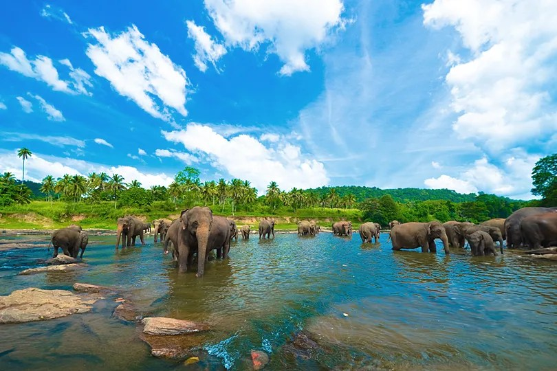 Be present to witness up to 300 elephants descend upon the watering hole in the Minneriya National Park