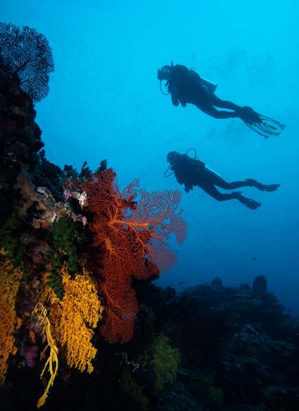 Divers over reef (dig)-Fiji