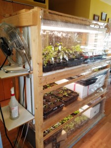 using a DIY indoor greenhouse