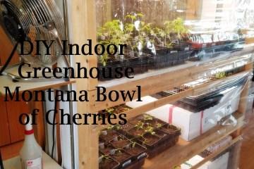 Montana Bowl of Cherries DIY Indoor Greenhouse