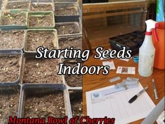 Montana Bowl of Cherries-starting seeds indoors