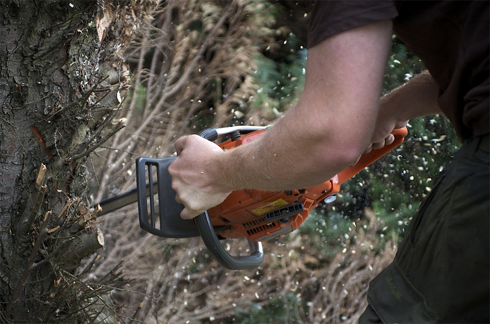 Chainsaw being used by tree surgeon