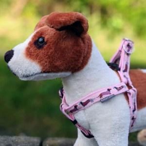 pink dachshund dog harness