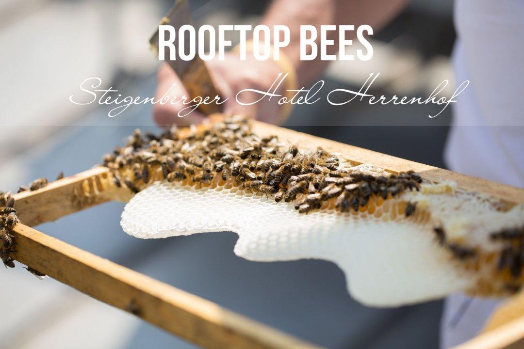 rooftop bees steigenberger hotel herrenhof