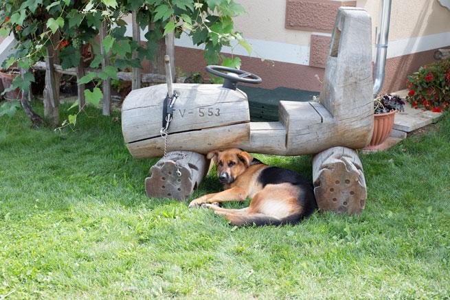 firbas slovenia dog