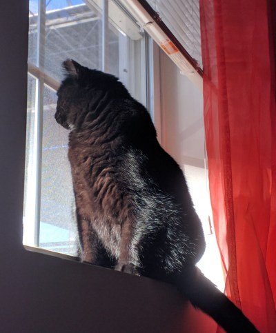 Ada, my cat
