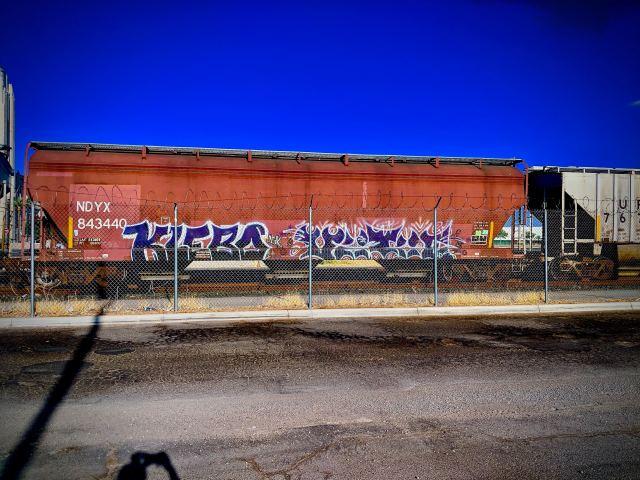 purple klebo