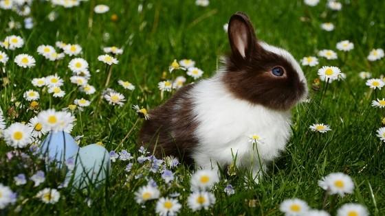 รักษาอย่างไรดี เมื่อน้อง กระต่ายขนร่วง เรามีคำแนะนำมาฝาก