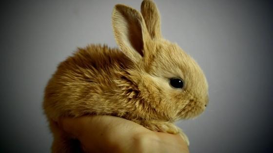 เจ้ากระต่ายขนปุกปุยสุดน่ารัก