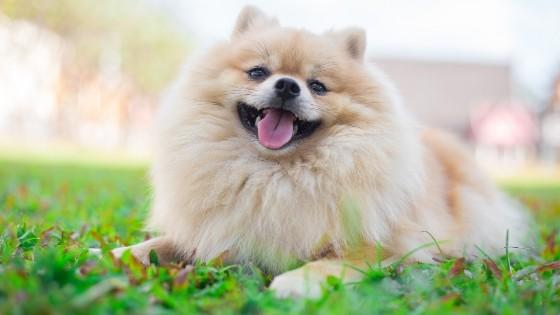 4 สุนัขพันธุ์เล็กเลี้ยงง่าย ถึงไม่เคยเลี้ยงสัตว์มาก่อนก็เลี้ยงได้สบาย ๆ