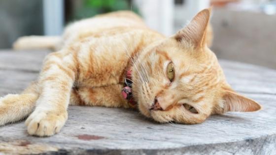 ถ้าน้องแมวมีอาการซึมลง ไม่ร่าเริงเท่าเดิม ไม่เล่นและนอนซมทั้งวันอย่างเห็นได้ชัด เรียกได้ว่าพฤติกรรมเปลี่ยนไปจากเดิมอย่างมาก ให้คุณพิจารณาได้เลยว่าน้องแมวของคุณกำลังมีปัญหาเรื่องสุขภาพอย่างแน่นอน