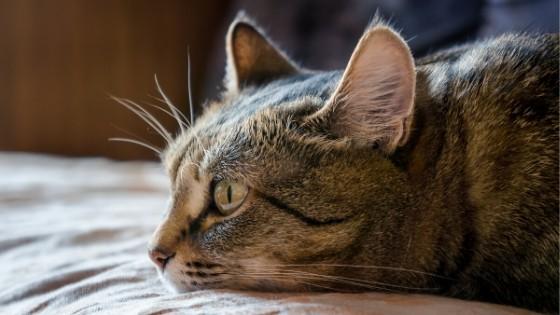 แมวเบื่ออาหาร เกิดขึ้นได้จากหลากหลายปัจจัย ไม่ว่าจะเป็นมาจากนิสัยส่วนตัวของน้องแมวเองหรือเกิดจากโรคภัยต่างๆ ลองมาดูสาเหตุที่น้องแมวเบื่อรู้สึกอาหารกันดีกว่า