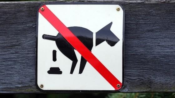 ดูแลอย่างไรดีเมื่อสุนัขถ่ายไม่ออก