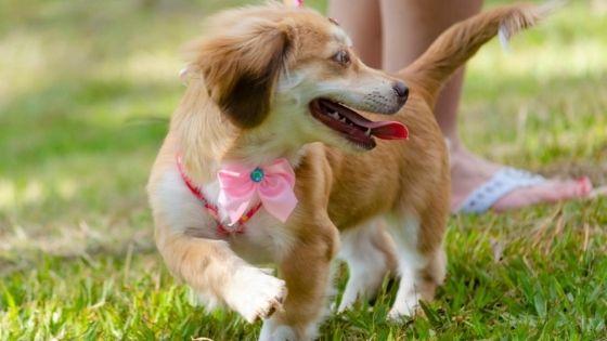 7 ประโยชน์การเลี้ยงสุนัข ที่คุณรู้แล้วต้องอึ้ง
