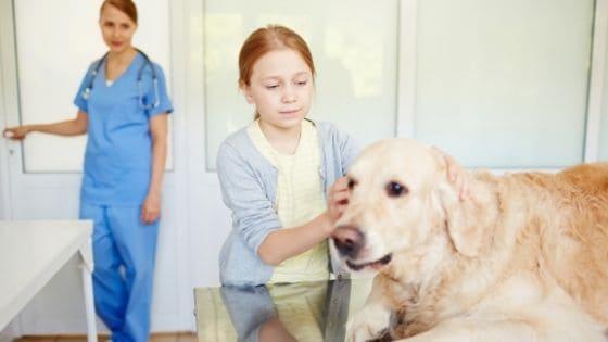 สุนัขเป็นหนองใน เกิดจากอะไร อันตรายถึงชีวิตจริงหรือ?
