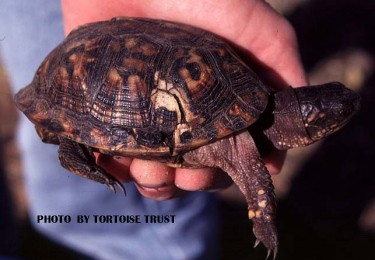 Box turtle health shell cracked