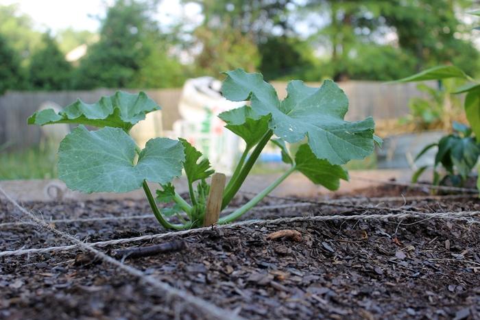 gardenupdate10