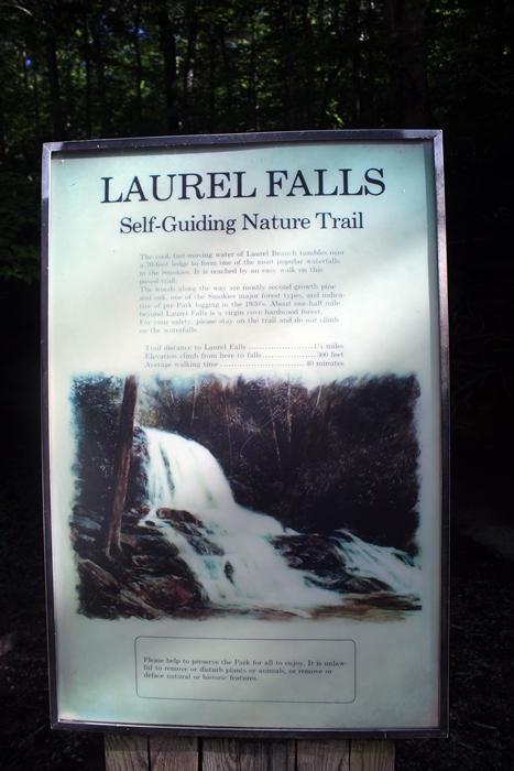 Laurel Falls Trail: GSMNP