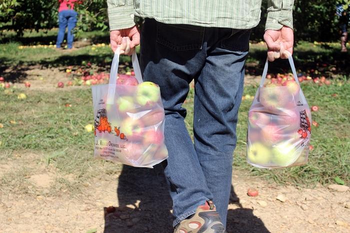 apples02s