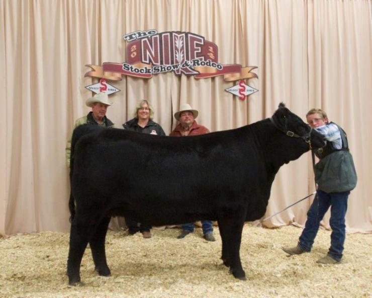2014 Reserve Champion Merit Heifer