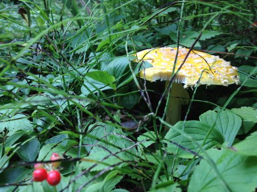 Giant mushroom spotted at Cedar Campus.