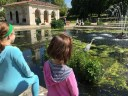A blue heron at the Italian Gardens in Kensington.