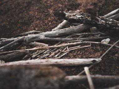 Stöcke im Wald