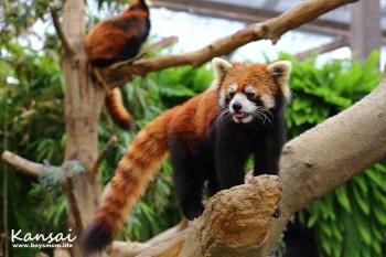 神戶動物王國 水豚、袋鼠任你摸,零距離的生態觀察教室