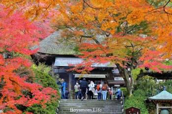 九州賞楓大興善寺|127階之上的艷紅世界