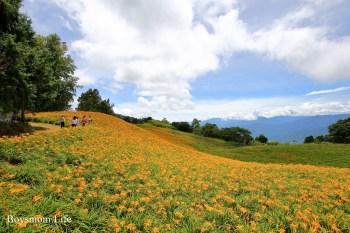 花蓮赤科山金針花季|北海道等級的丘陵花海