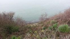 A beach far below, through the poison oak.