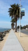 Waiting for my bus on Avenue of Palms.