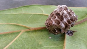 A wasp nest found on the underside of a houseplant at Flora Grubb Gardens.