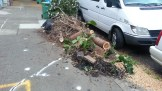 This is one way to fix the problem when your street tree is buckling the sidewalk.