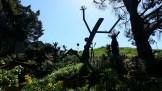 Came across this unexpected sculpture garden whilst traversing the Castro-Duncan Open Space recently.