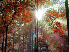 Photograph of sun shining through leaves causing flare