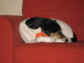 Sadie napping with her toy version 1