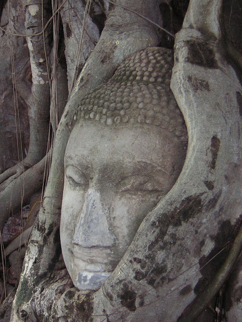 Ayyuthaya tree Buddha