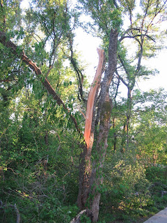 Tree broken by lightening/ wind storm