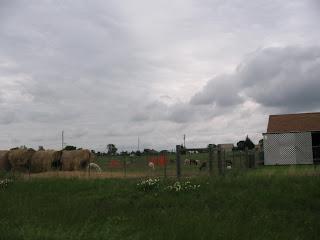 A sheep farm in Lucas